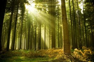 image courtesy of http://www.luxuryhomedigest.com/wp-content/uploads/2014/03/forest-tree-sun-ray-light-spruce.jpg